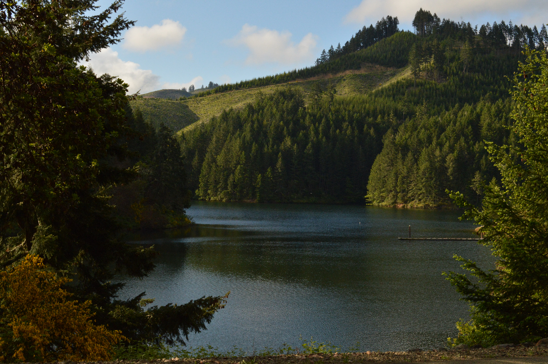 Sutherlin Reservoirs – Oregon Bicycling and Birding